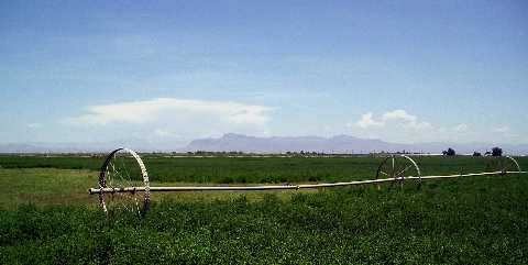 Alfalfa fields with Superstition Mountains in background