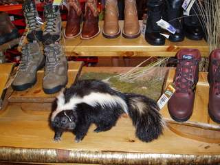 How did this skunk get into the shoes?
