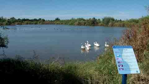 Gilbert Riparian Preserve Pond