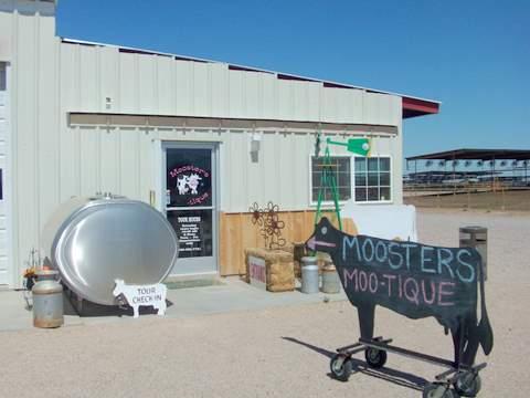 Mooster's Moo-Tique