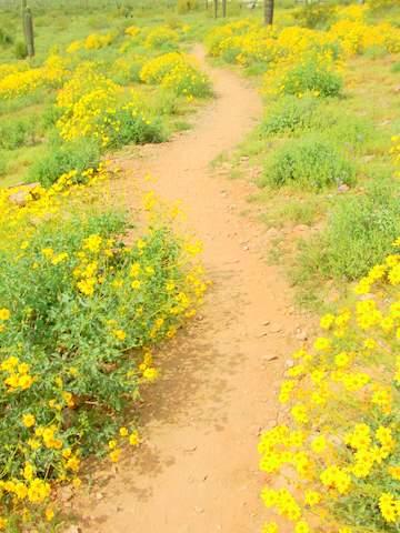 Brittlebush Trail
