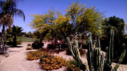 Spring in the desert